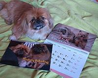 misio i kalendarze
